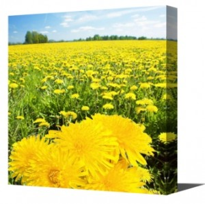 a-flower-canvas-painting-print-brings-warm-and-positive-hope
